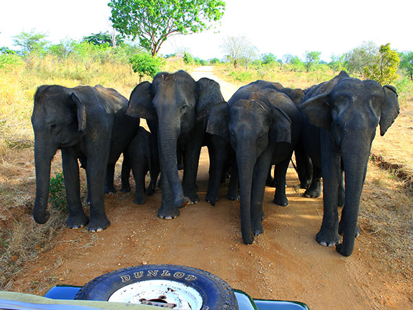 Day Tours in Sri Lanka, Day Tours and Excursions in Sri Lanka, Sri Lanka Day Tours and Trips, Sri Lanka Day Trips and Excursions