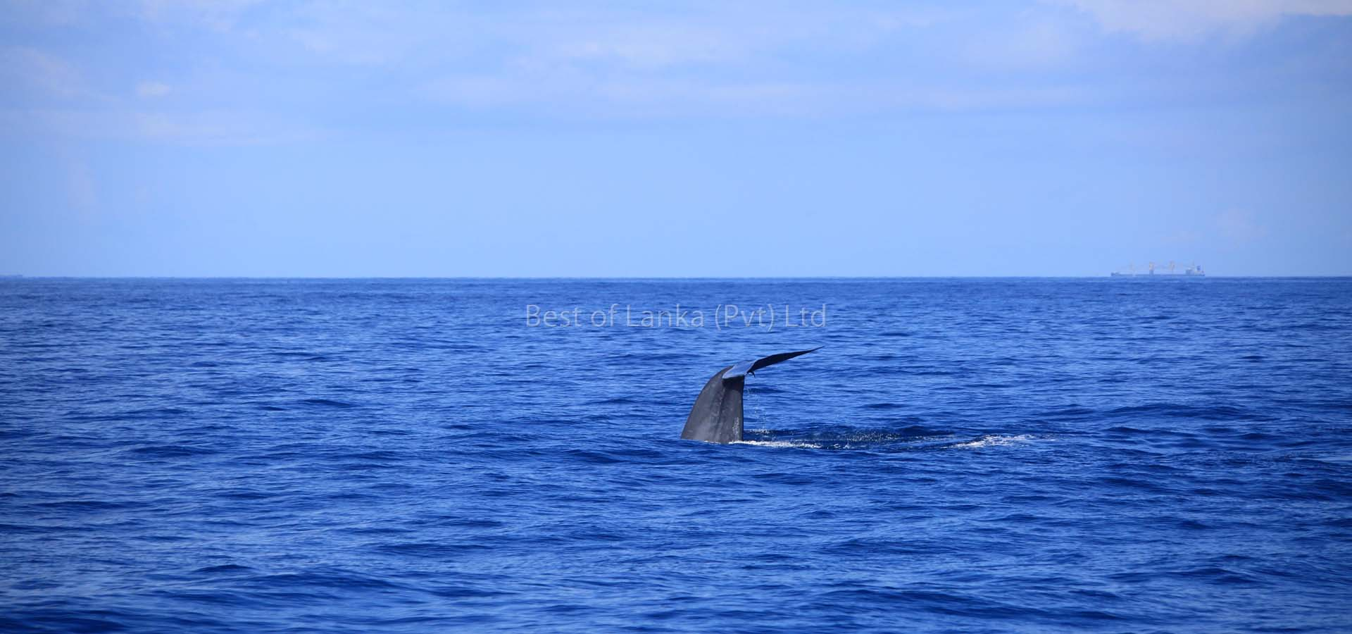 Whale watching day trip in Mirissa, Mirissa Whale watching Day Trip, Whale watching Excursion in Mirissa, Mirissa Whale watching Day Trip