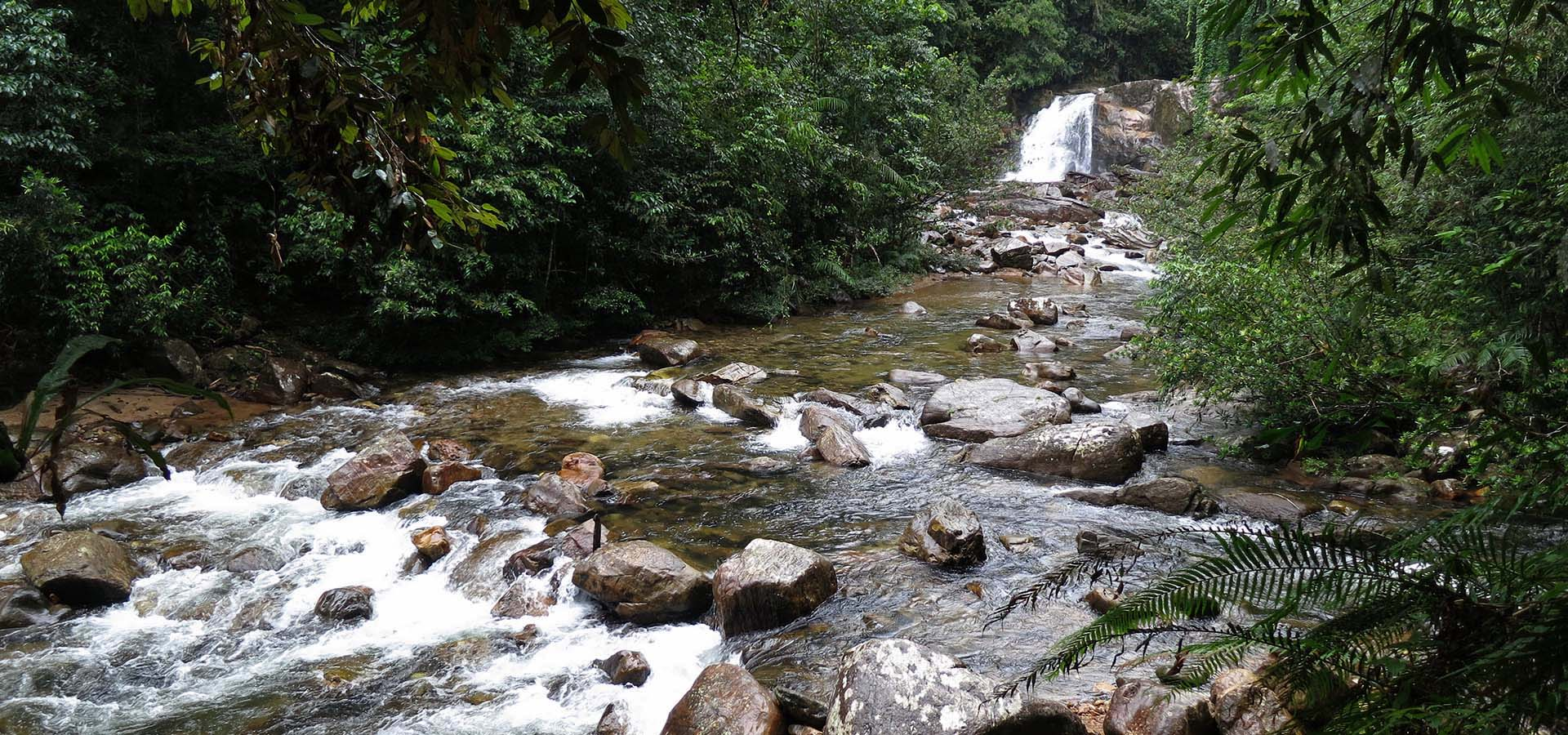 Day Trip to Sinharaja Rain Forest, Sinharaja Rain Forest Day Tour, Excursion to Sinharaja Day Tour, SInharaja Rain Forest Day Trip